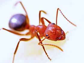 49项国际大奖惊艳反转短片《蚂蚁的旅程》